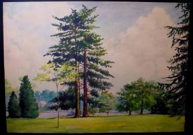 WR Watkins tall tree